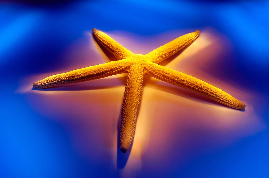 Ramon Vaquero-Starfish logo- photographers Vigo